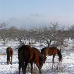Гора Клементьева: первопроходцы и романтики неба