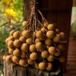 Фрукты острова Бали