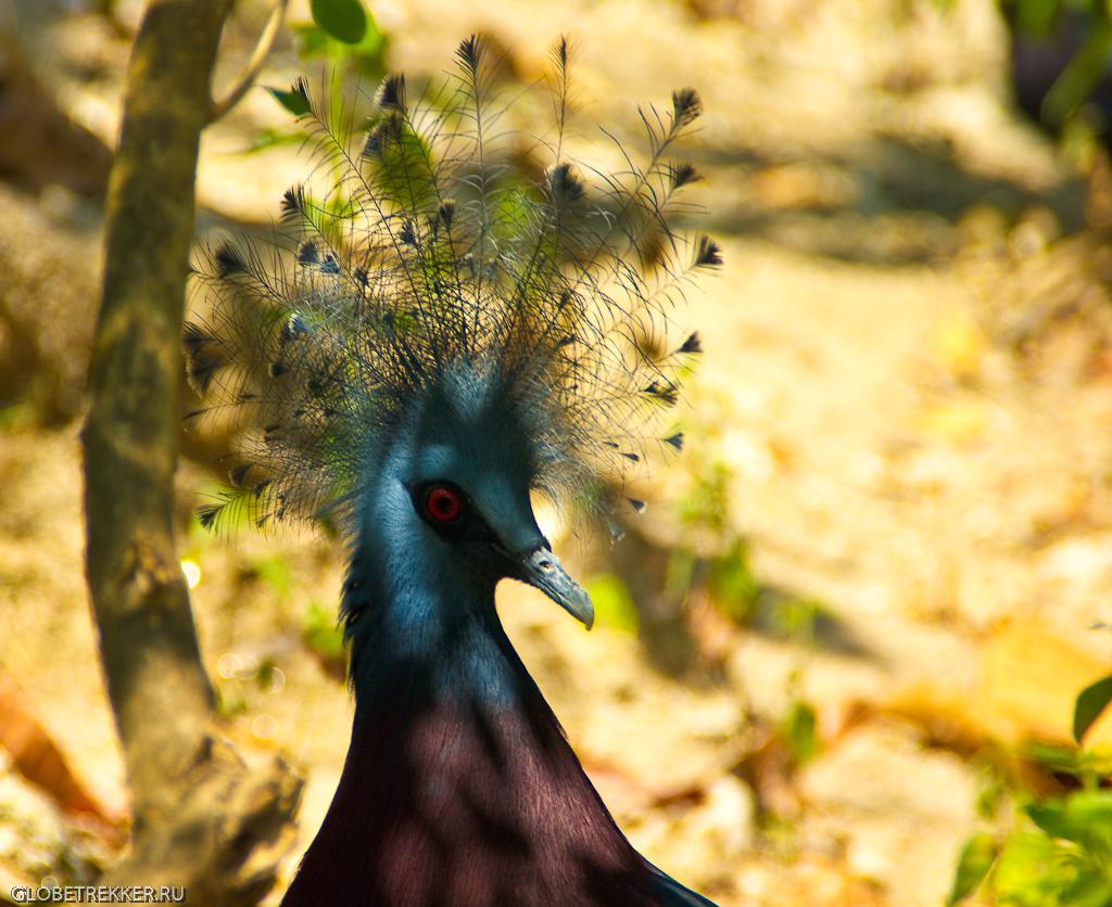 животное с короной на голове - фото 2