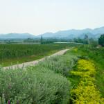 Тропические виноградники Хуа Хина — Hua Hin Hills Vineyard