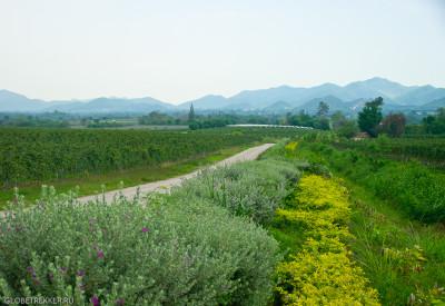 Тропические виноградники Хуа Хина - Hua Hin Hills Vineyard 3