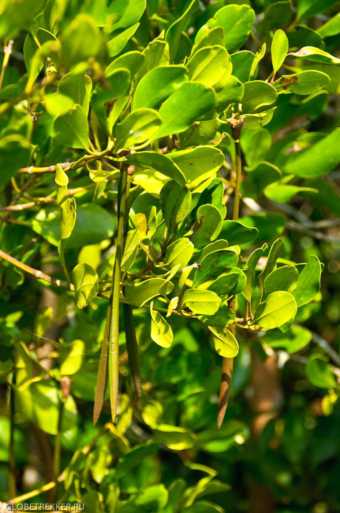 Мангры Хуа Хина: Pranburi Mangrove Forest Park 12