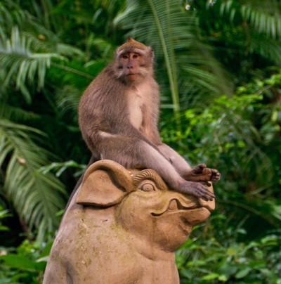 Священный лес наглых обезьян в Убуде 22