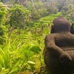 Священный лес наглых обезьян в Убуде