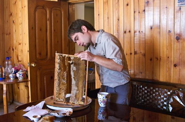 Про суровых сванских пчёл