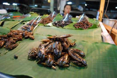 Про вкусных тайских водяных жуков 2