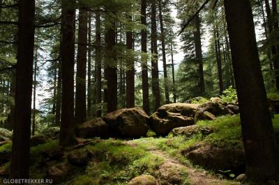 Манали - как добраться, где жить и чем заняться 14
