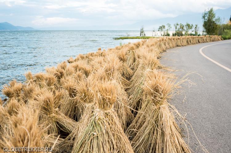На байке вокруг озера Эрхай 洱海