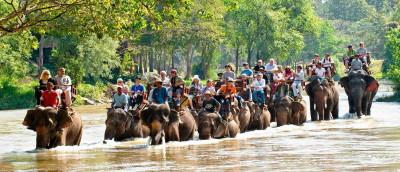 День слона в Таиланде 10