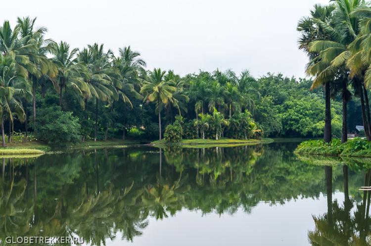 Ботанический Сад в Джинхонге: Как растут тропические фрукты