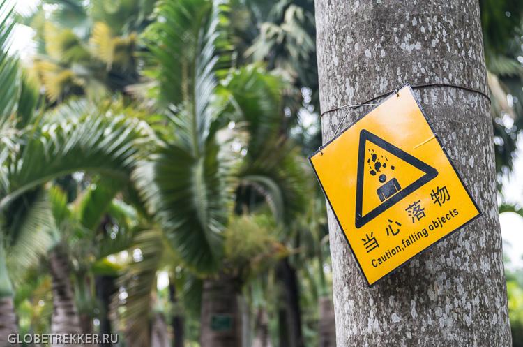 Ботанический Сад в Джинхонге: Как растут тропические фрукты 6