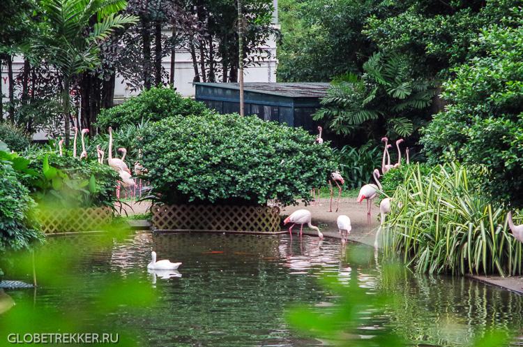 <p>Парки Гонконга: Коулун парк, зоопарк и ботанический сад</p>