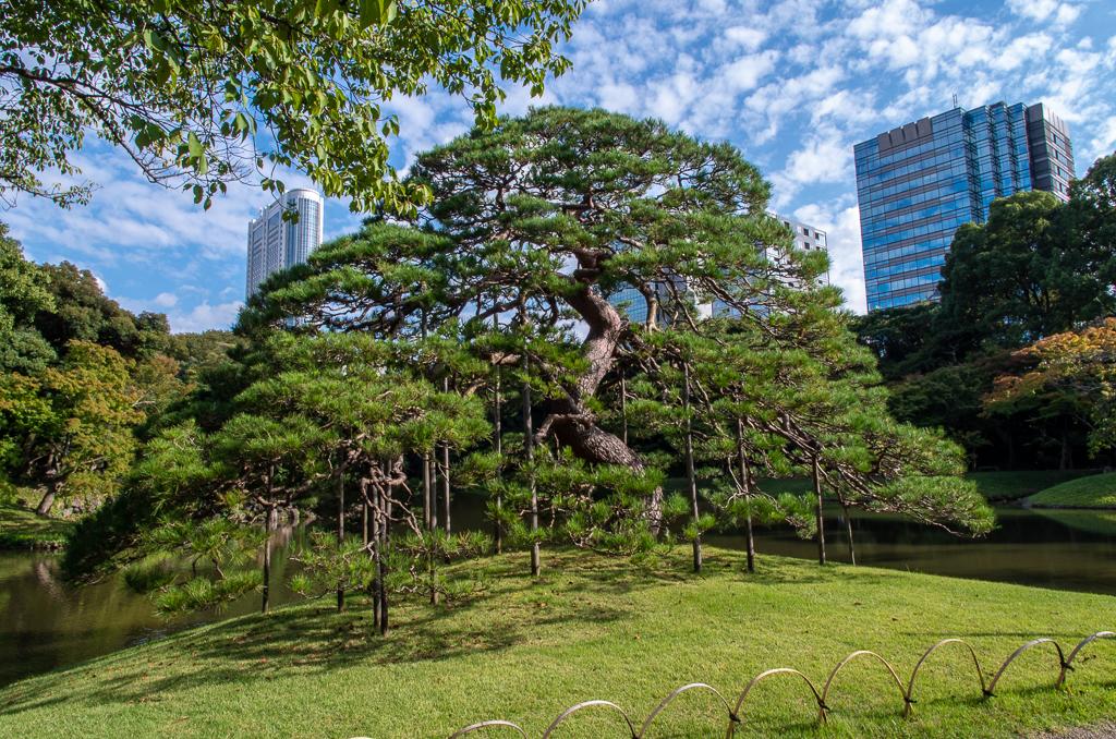 Токио, день 3: Снова сад, снова храм, и кладбище